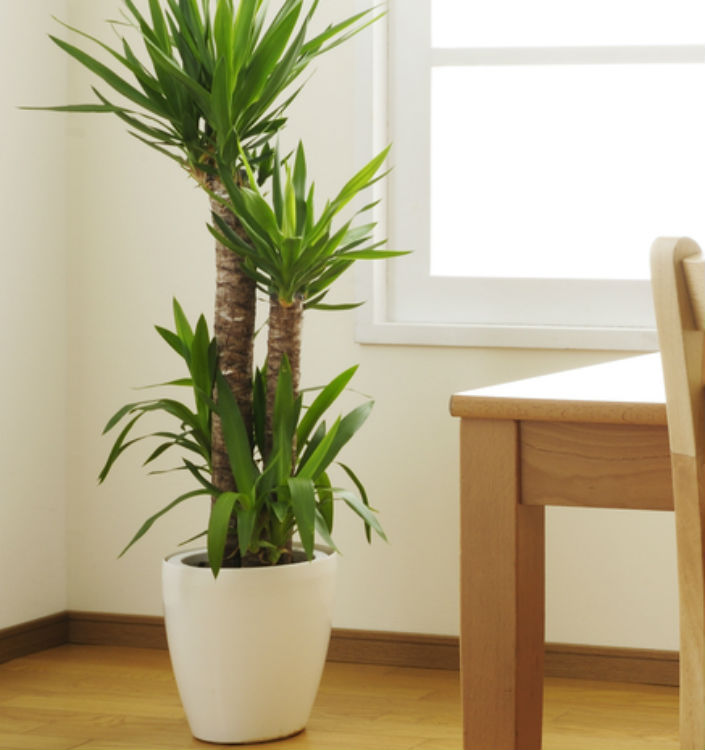 The Ultimate Guide To Choosing Best Inside Office Plants Pkk News Company